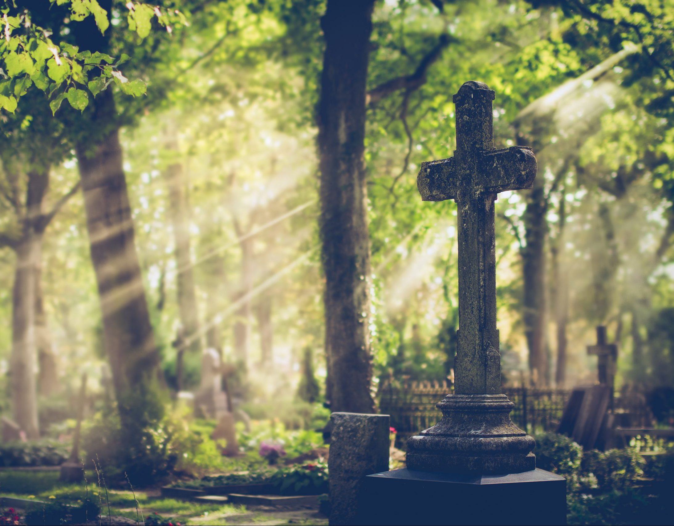 Friedhof: Ein Friedhof im Wald.